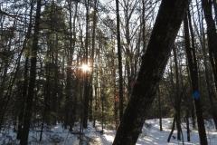 trail-in-winter