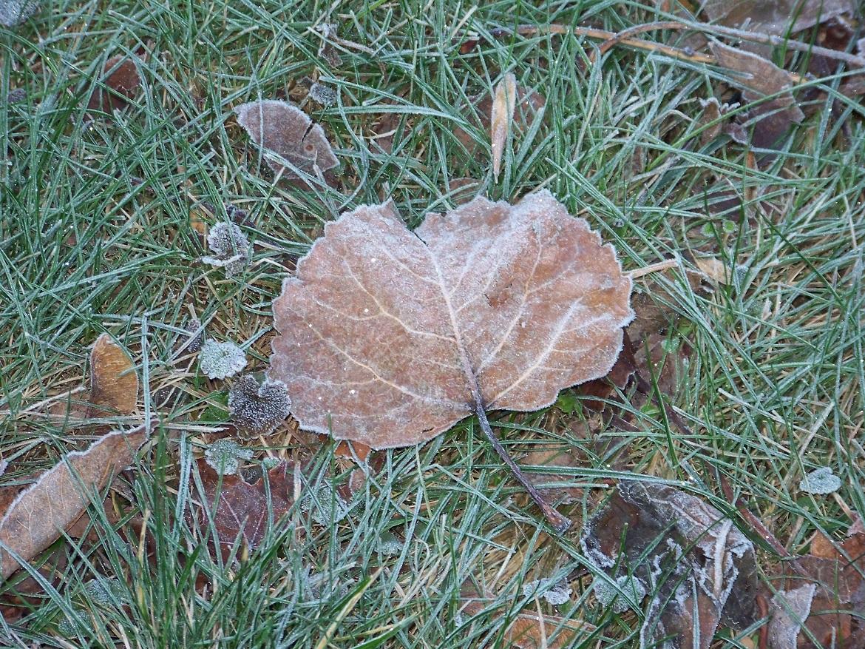 leaves - leaves