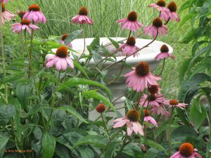 cone flower 300x225 - Gardening is for the Birds!