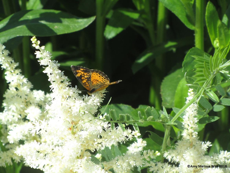 butterfly 2 - butterfly 2