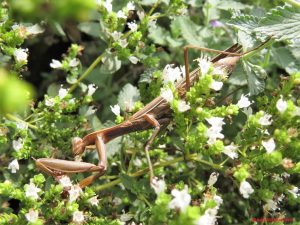 pray mantis 300x225 - Home