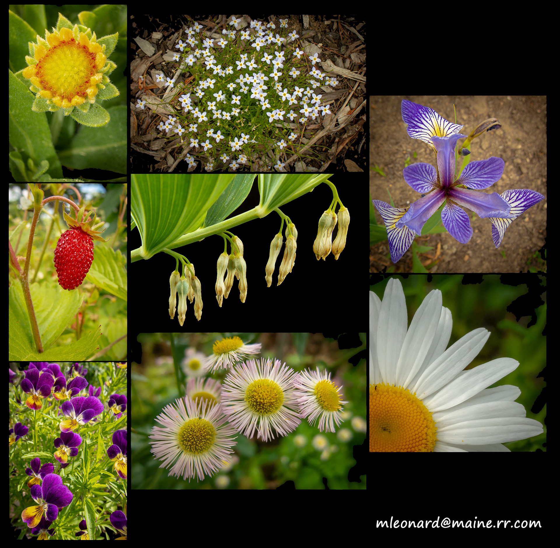 Garden composite 1 - Garden composite (1)