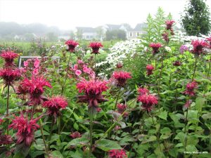 beebalm 300x225 - Upcoming Events