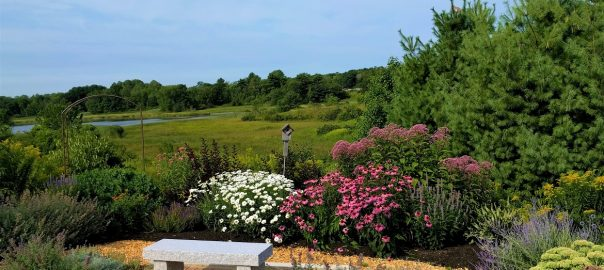 TW pollinator garden 604x270 - Gift Certificates Available