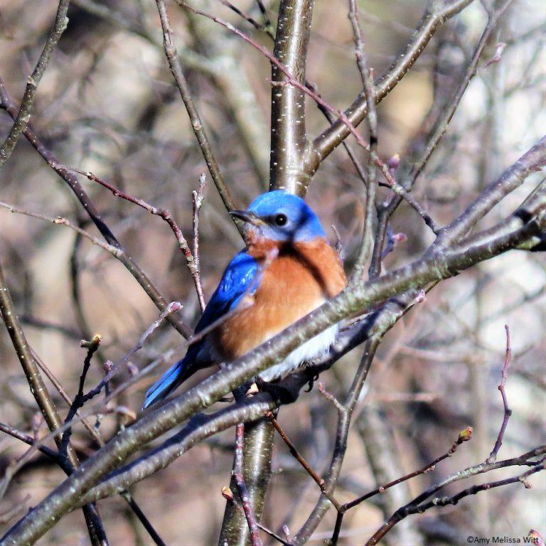 bluebird4 768x768 - bluebird4