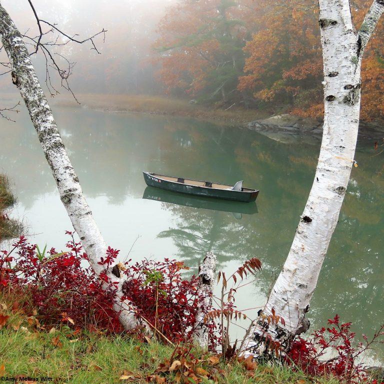 boat birch 768x768 - boat & birch