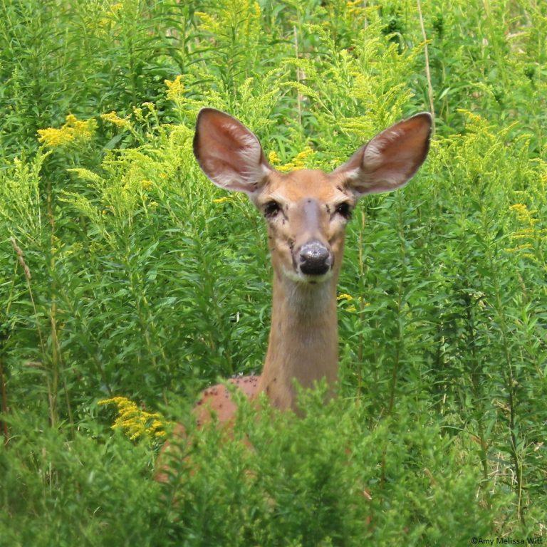 deer 768x768 - deer